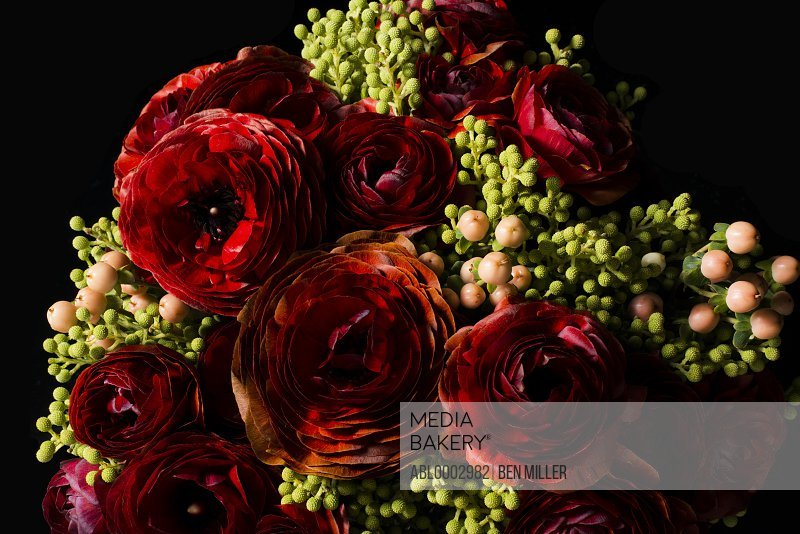 Close up of Red Persian Buttercup Flowers and Hypericum Berries