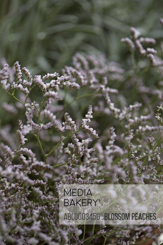 Buds Blossom Plant