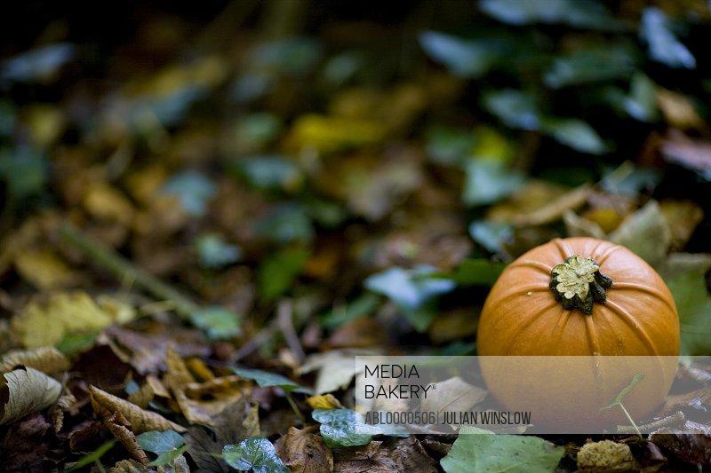 Close up of orange pumpkin on ground