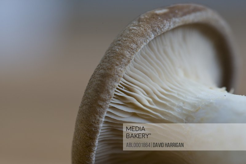 Extreme close up of an eryngi mushroom