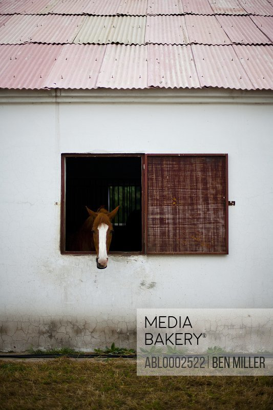 Horse Looking Out of Stable Window