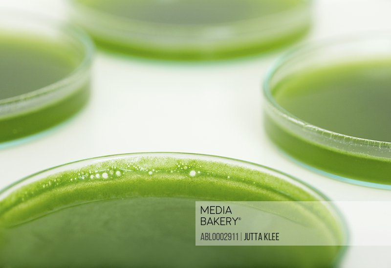 Petri Dishes with Green Solution