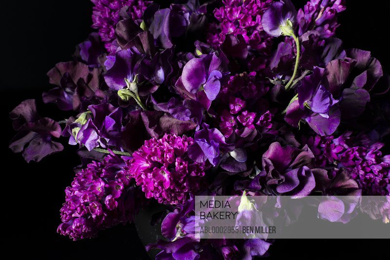 Close up of Purple Lilac and Iris Flowers