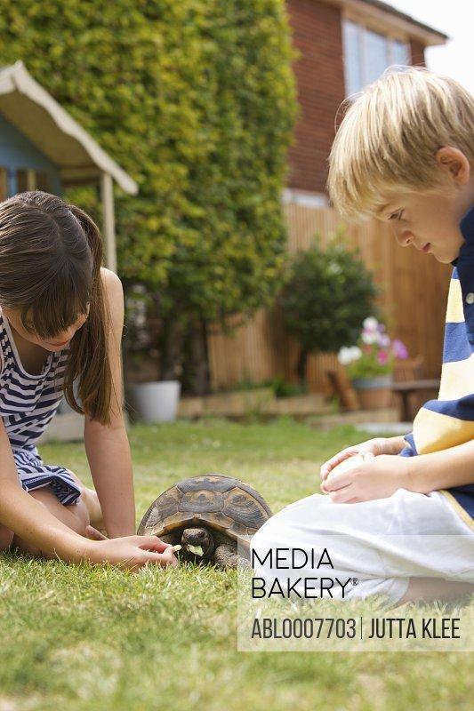 Boy and Girl Feeding Tortoise in Garden