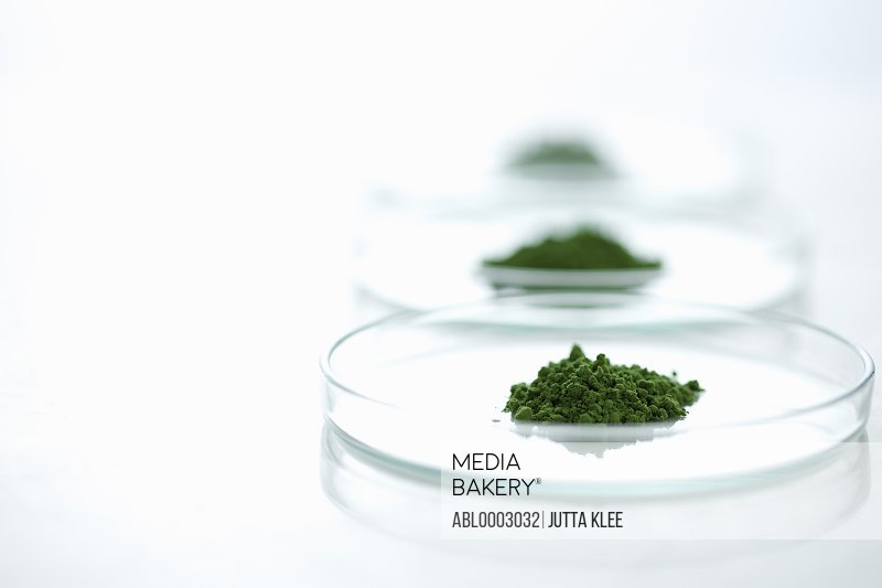 Petri Dishes with Wheatgrass Powder