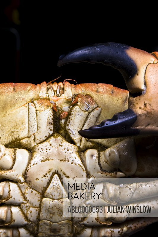 Extreme close up of crab and claw