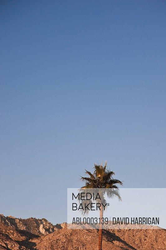 Palm Tree and Desert Mountains, Palm Springs, California, USA