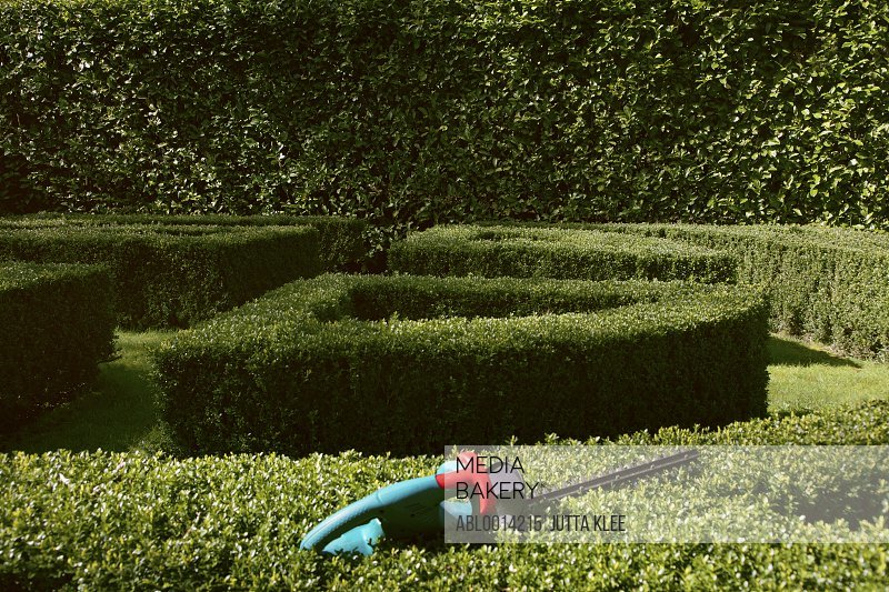 Electric Hedge Trimmer on Boxwood Bush