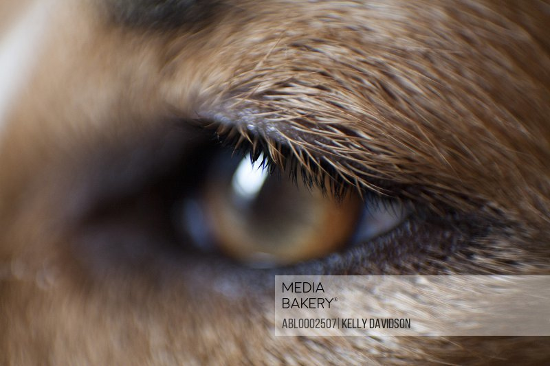 Extreme Close Up of Dog's Eye