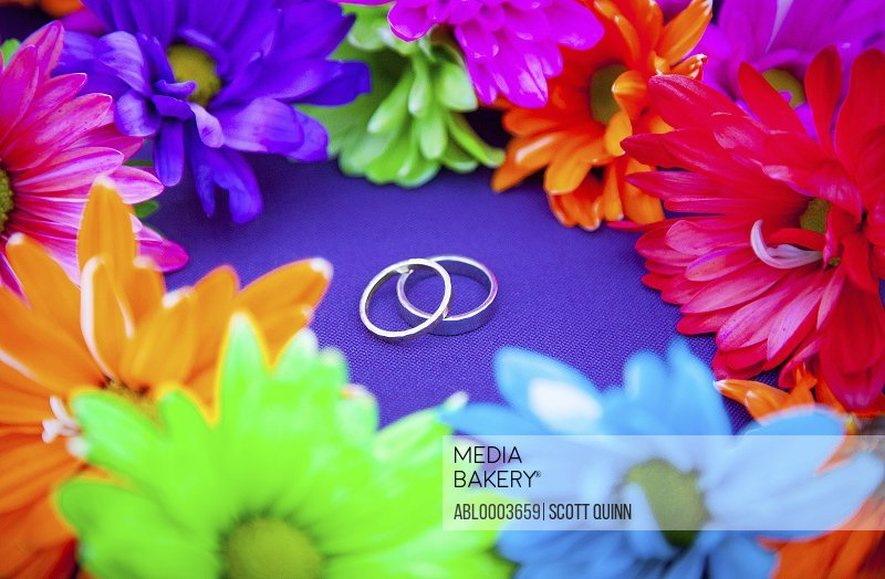 Wedding Rings Surrounded by Bright Coloured Flowers