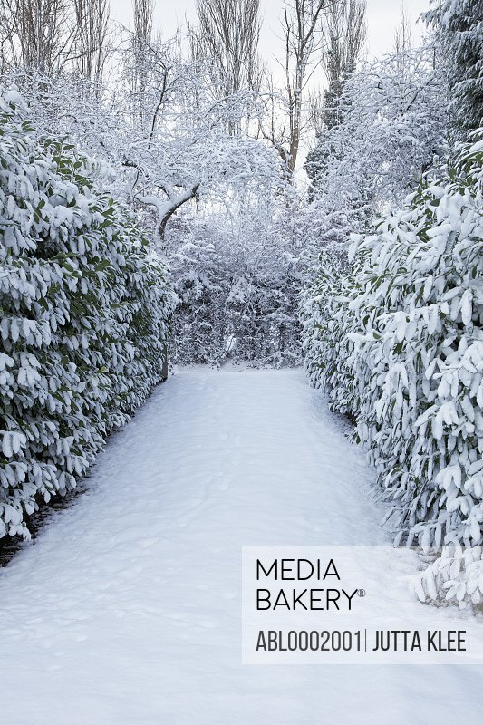 Garden Path Covered in Snow