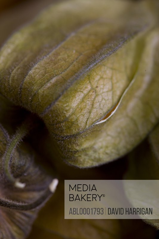 Extreme close up of a cape gooseberry - physalis