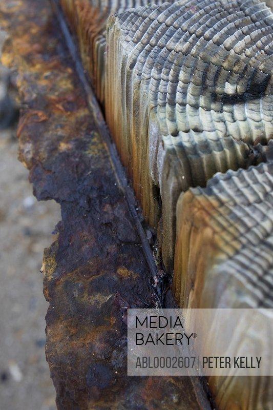 Rusting Wood and Metal