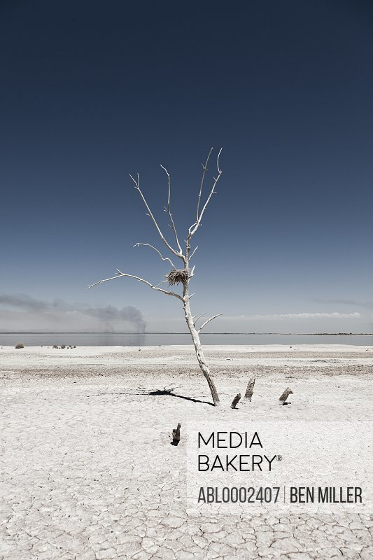 Leafless Tree by Lakeshore