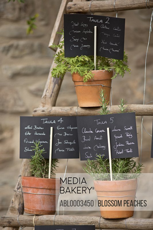 Plant Pots with Herbs and Signs with Text