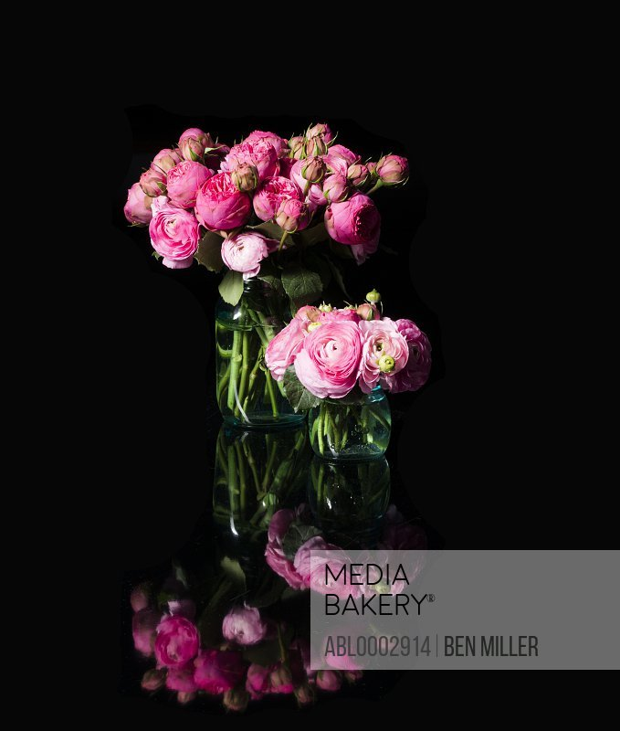 Bouquets of Pink Persian Buttercup Flowers in Glass Vases