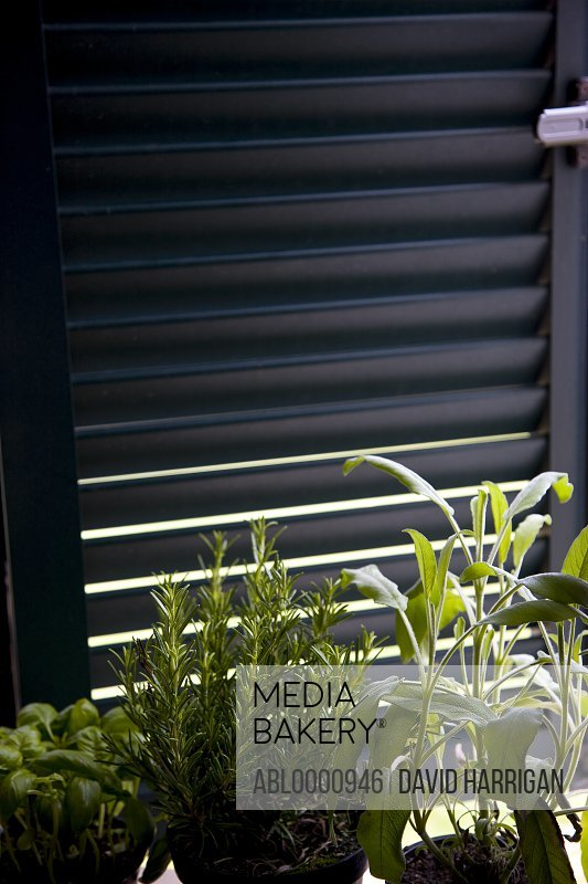 Window shutter with pots of basil rosemary and sage on the  window sill
