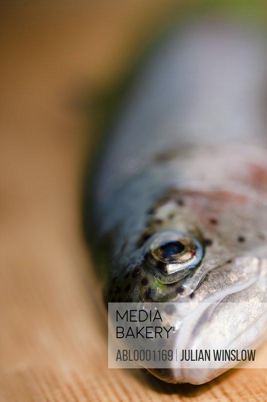 Close up of a fish head