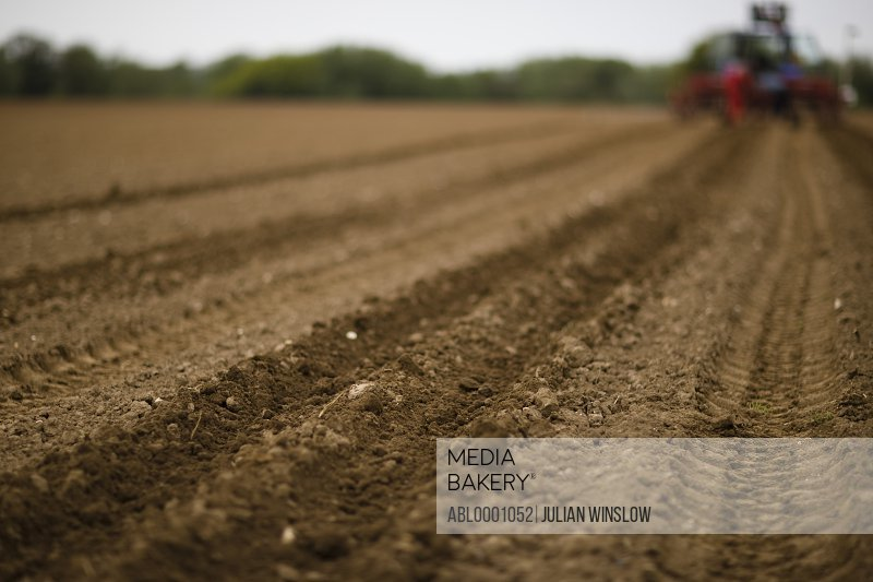 Agricultural field with tractor tyre tracks