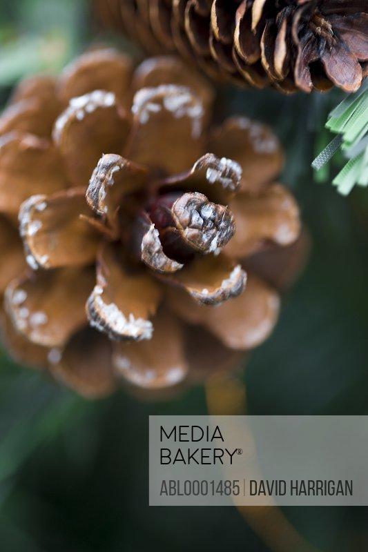 Close up of decorative pine cones
