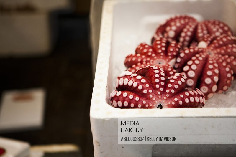 Red Octopuses in a Crate
