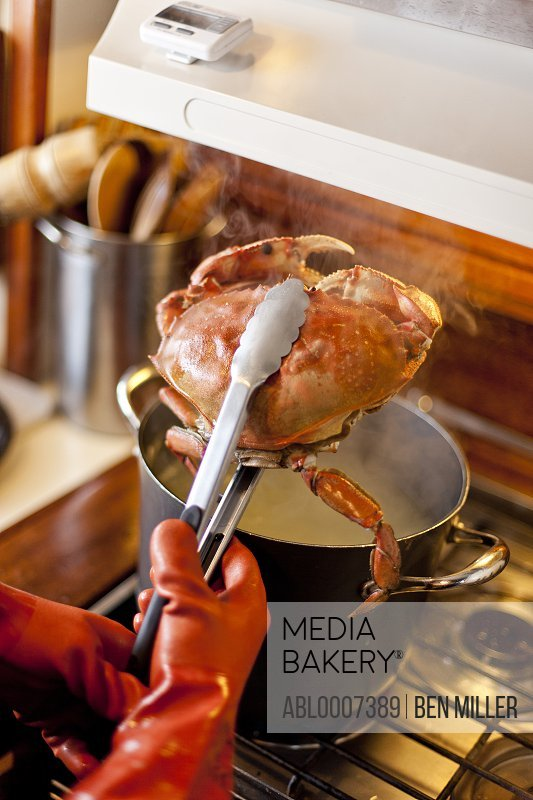 Cook Holding Dungeness Crab over Saucepan