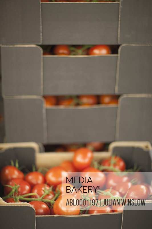 Close up of a crate filled with vine tomatoes