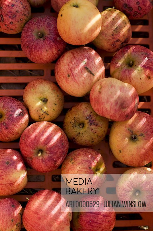 Extreme close up of red apples laid out on a crate