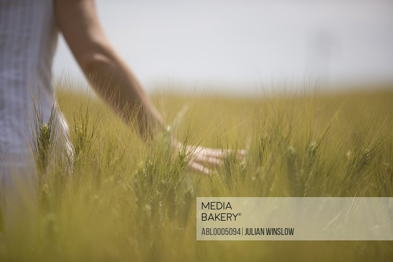 Close up of a woman hand skimming wheat in a field