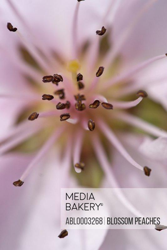 Pink Lily, Full Frame