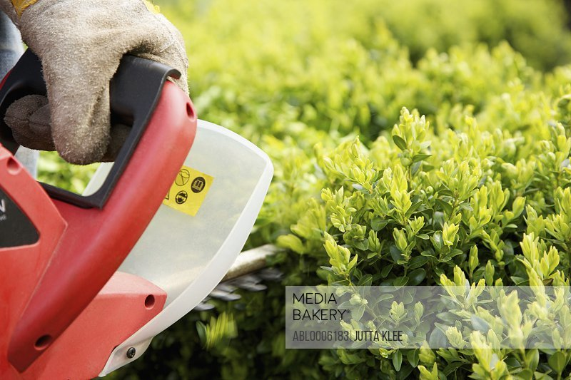 Close up of a man's hand pruning a hedge with electrical trimmer