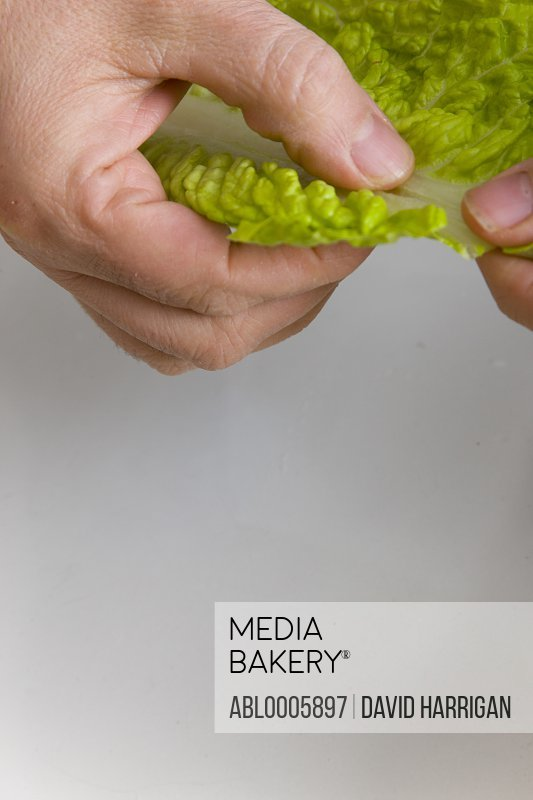 Close up of a man's hands tearing a lettuce leaf