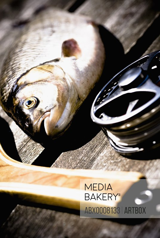 Close-up of a fishing reel and a fishing rod with a fish