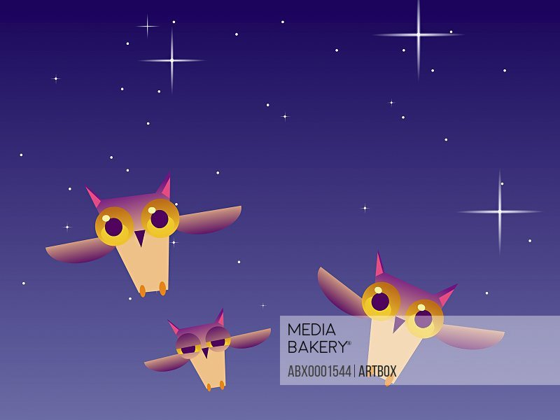 Low angle view of three owls flying in the sky