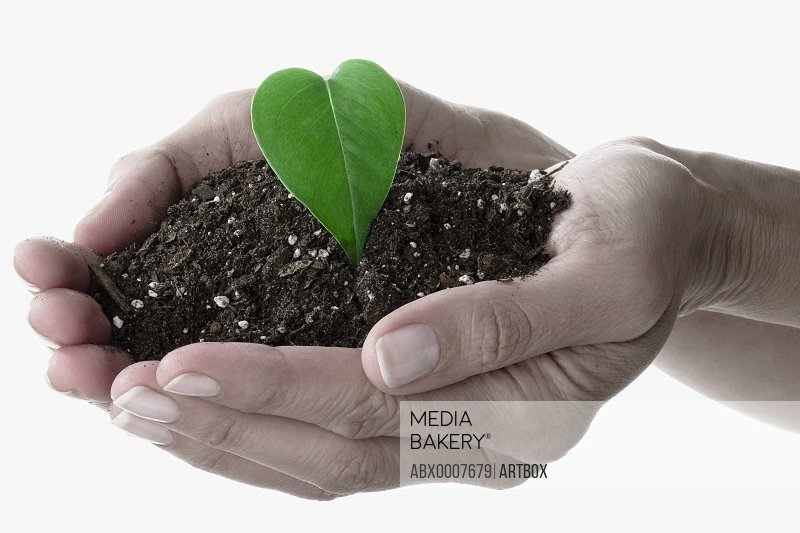 Close-up of a person's hand holding dirt with a leaf