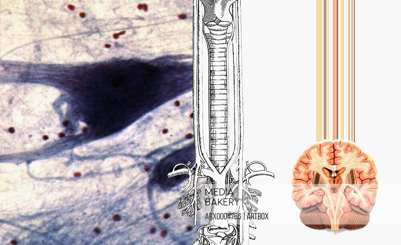 Diagrams of the human spine and human brain