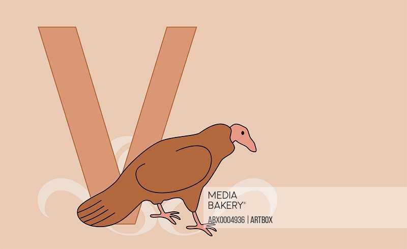 The letter V with a vulture
