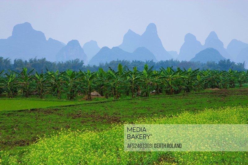 Guilin, China, Asia, field, rape field, banana plantation, Bananenböume, mountains, karst, karst landscape, spring