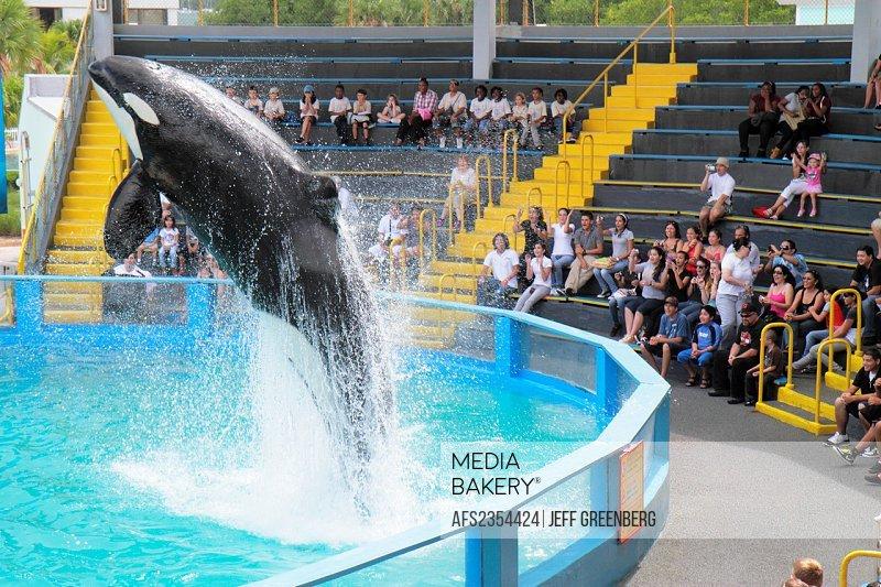 Florida, Miami, Key Biscayne, Miami Seaquarium, Lolita, killer whale, orca, 40th anniversary performance, jumping, audience,