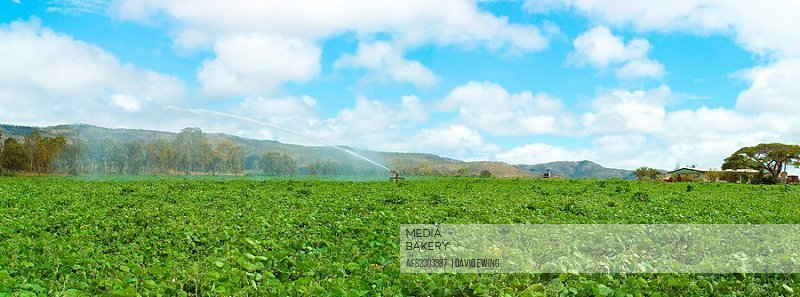 A field being irrigated