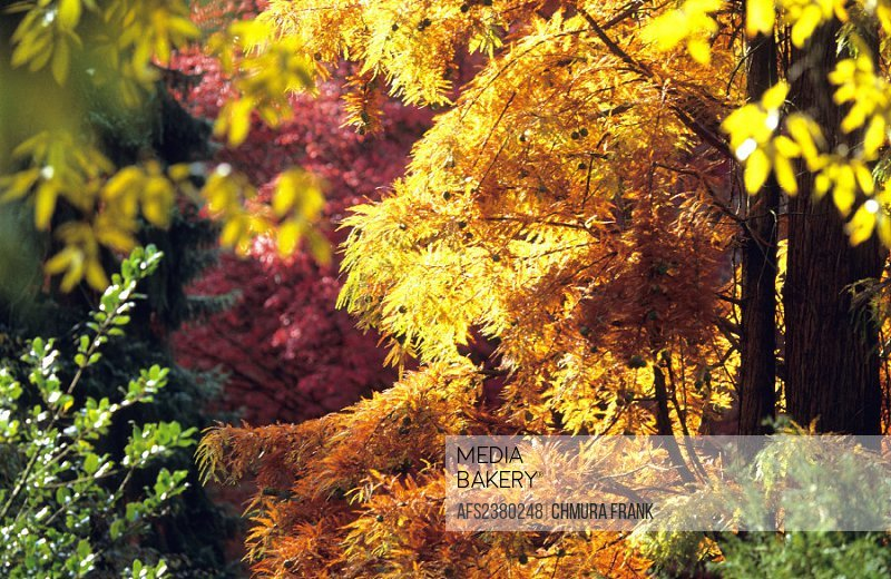autumn, autumn colors, bushes, colors, detail, foliage, garden, different, colors, leaves, nature, park, shrubs, tre