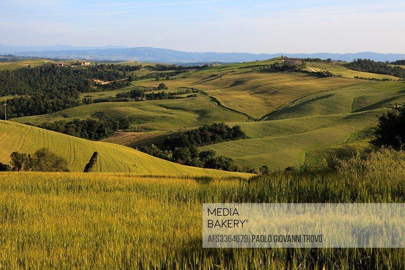 Typical scenary of Crete Senesi, Asciano, Siena, Tuscany, Italy.
