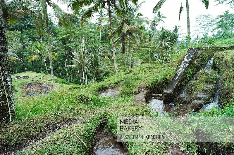 Water irrigation in the Subaks of Tampak Siring