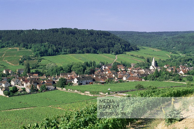 Agriculture, Bourgogne, Burgundy, Chateau de Vougeot, Countryside, France, Europe, Landscape, Travel, Vineyard, Viti