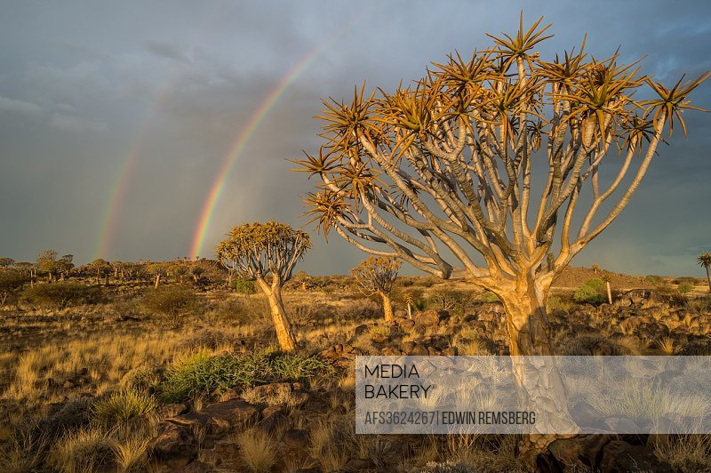 Keetmanshoop, Namibia - Quiver tree forest with rainbows overhead in the Playground of the Giants.