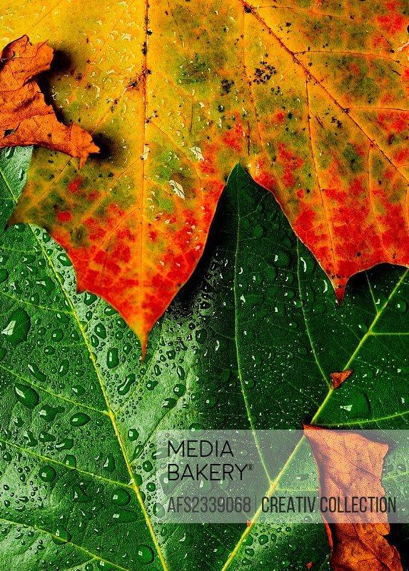 dewed autumn foliage