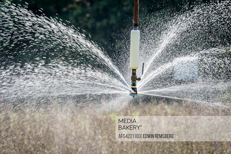 Water spraying out of sprinkler head of irrigation system as it waters field of soybeans, Tifton, Georgia. USA.
