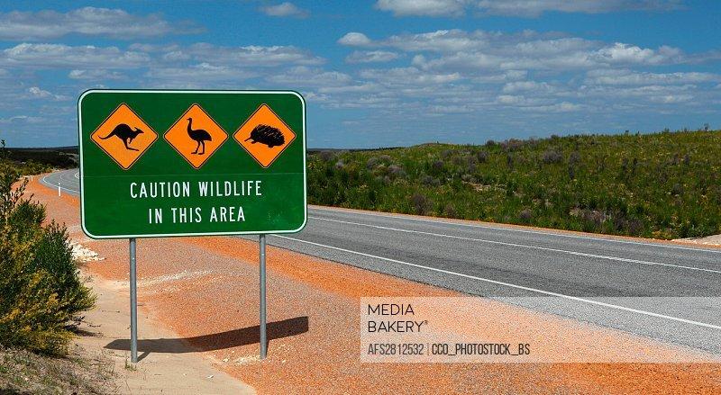 Western Australia, west coast, coast, Australia, street, road sign, Wildlife, attention, kangaroo