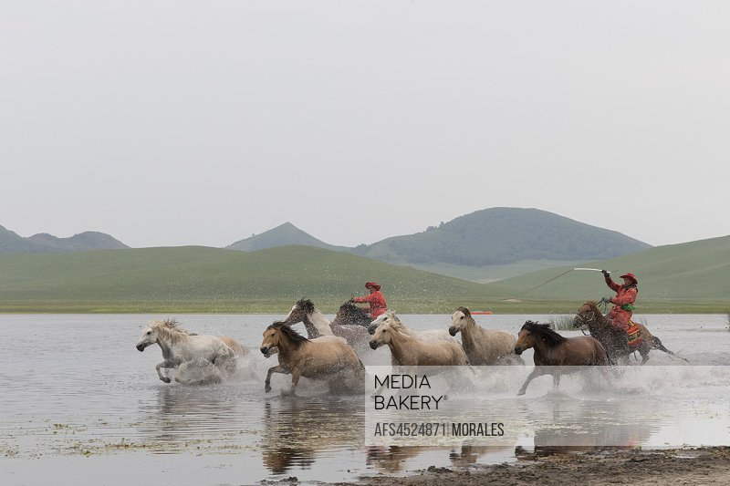 China, Inner Mongolia, Hebei Province, Zhangjiakou, Bashang Grassland, horses, a group in the water.