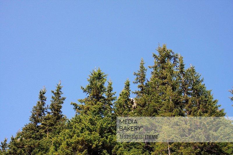 Switzerland, Bernese Oberland, canton Bern, Schynige Platte, firs, stones, skies, heavens,